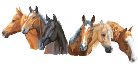 Ilustración de Set of colorful vector portraits of horses breeds (Trakehner horse, Welsh Pony, Appaloosa horse) isolated on white background - Imagen libre de derechos