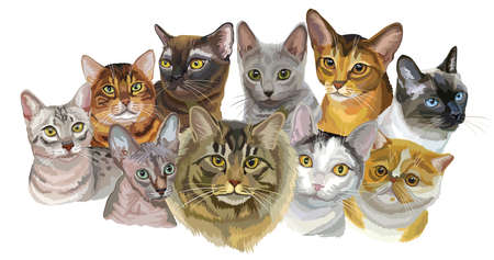 Ilustración de Set of colorful vector portraits of cats  breeds (Exotic Shorthair, Abyssinian, Bengal , Burmese, Egyptian Mau, Maine Coon, Russian Blue, Sphynx , Thai cats) isolated on white background - Imagen libre de derechos