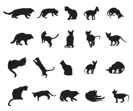 Illustrazione per Set of different breeds cats silhouettes (sitting, standing, lying, playing) in black color isolated on white background. Vector monochrome illustration. - Immagini Royalty Free