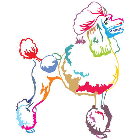 Ilustración de Colorful contour decorative portrait of standing in profile Poodle, vector isolated illustration on white background - Imagen libre de derechos