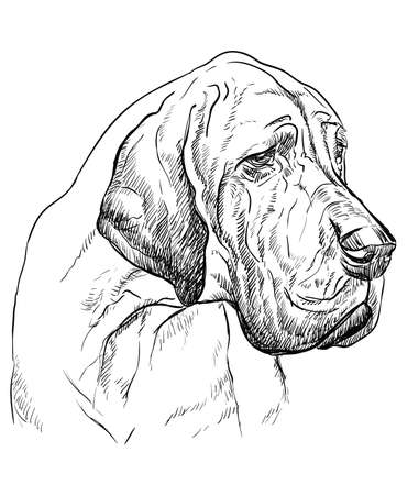 Ilustración de Great Dane vector hand drawing illustration in black color isolated on white background - Imagen libre de derechos