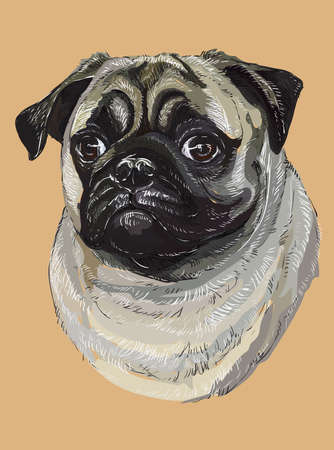 Illustration for Pug vector hand drawing illustration in different color on beige background - Royalty Free Image
