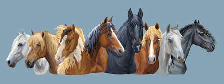 Ilustración de Set of colorful vector portraits of different horses breeds (Russian Heavy Draft Horse; Byelorussian Harness Horse; Friesian horse) isolated on grey-blue background - Imagen libre de derechos