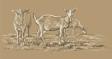 Ilustración de Vector hand drawing Illustration goats on pasture standing in profile. Monochrome vector hand drawing sketch illustration in black and white colors isolated on beige background. - Imagen libre de derechos