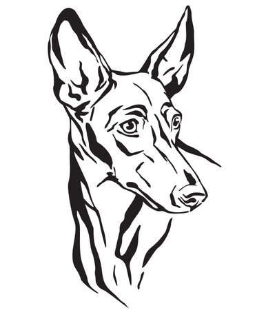 Illustrazione per Decorative outline portrait of Cirneco dell' Etna Dog looking in profile, vector illustration in black color isolated on white background. Image for design and tattoo. - Immagini Royalty Free