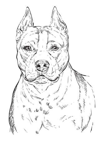 Illustrazione per American Staffordshire Terrier vector hand drawing illustration in black color isolated on white background - Immagini Royalty Free