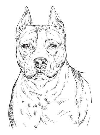 Ilustración de American Staffordshire Terrier vector hand drawing illustration in black color isolated on white background - Imagen libre de derechos