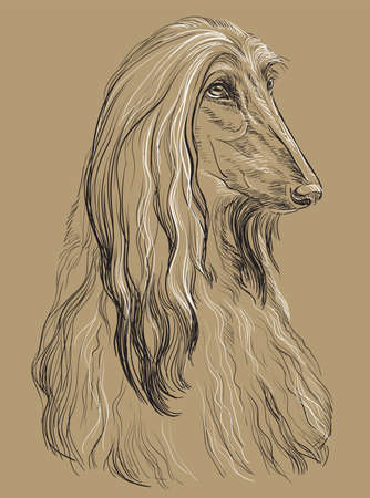 Ilustración de Afghan Hound Dog vector hand drawing illustration in black and white colors isolated on beige background - Imagen libre de derechos