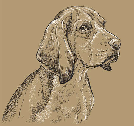 Ilustración de Beagle vector hand drawing illustration in black and white colors isolated on beige background - Imagen libre de derechos