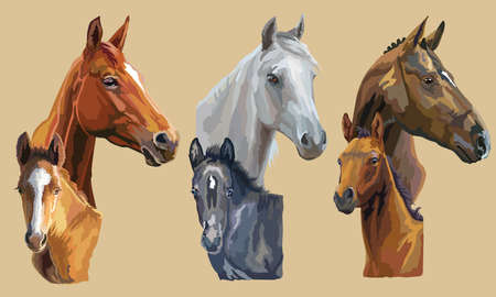 Illustration pour Set of colorful vector realistic portraits of mares and foals looking in profile. Group of horses isolated on beige background. Vector colorful portraits of horses. - image libre de droit