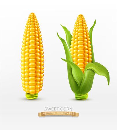 Ilustración de Vector two corn. corn on the cob with leaves. design element - Imagen libre de derechos