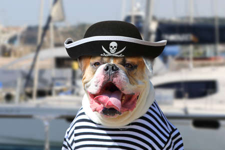 Foto de Portrait of American Bulldog dressed in a pirate clothing with tongue hanging out on the background of sea yacht - Imagen libre de derechos