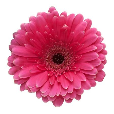 Photo pour Pink flower - image libre de droit