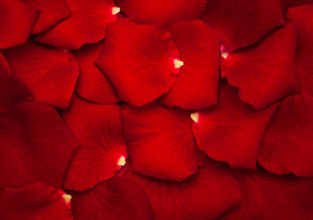 Photo pour Close up - Red rose petals - natural background - image libre de droit