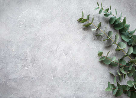 Photo pour Eucalyptus branches and leaves on a grey concrete background - image libre de droit