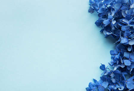 Photo for Blue hydrangea flowers on blue pastel background. Floral border. Flat lay.  - Royalty Free Image