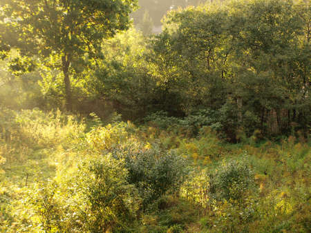 Overgrowth of bushes and stand alone tree in autumn sunlight