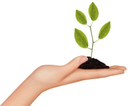 Illustration pour Person holding a young plant. Vector illustration.  - image libre de droit