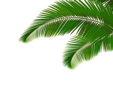 Illustration pour Palm leaves on white background.  - image libre de droit