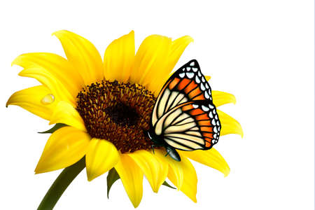 Illustration pour Nature summer sunflower with butterfly. Vector illustration.  - image libre de droit