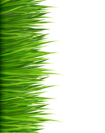 Illustration for Nature background with green grass.  - Royalty Free Image