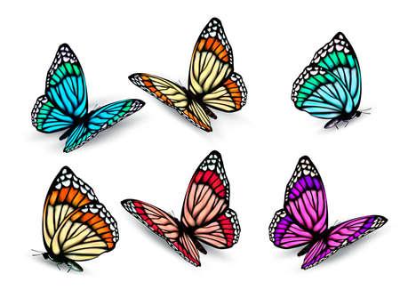 Illustration pour Set of realistic colorful butterflies. Vector - image libre de droit