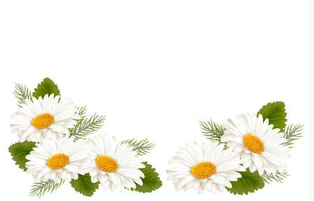 Illustration pour Nature background with white beautiful flowers. Vector illustration - image libre de droit