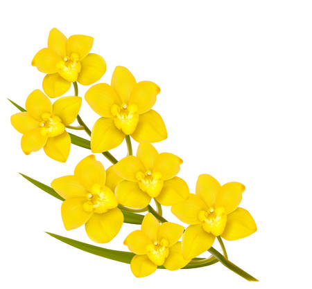 Illustration pour Holiday yellow flowers background. Vector. - image libre de droit
