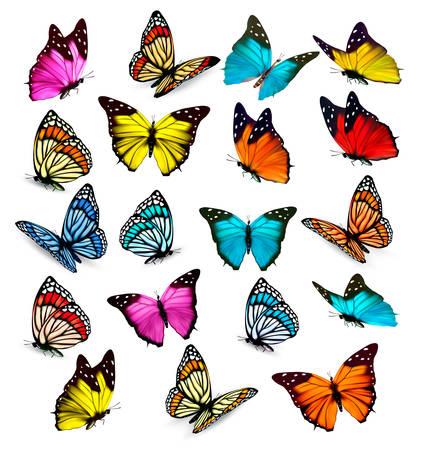 Illustration pour Big collection of colorful butterflies. Vector - image libre de droit