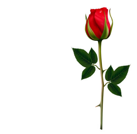 Photo for Flower background with a beautiful red rose. Vector. - Royalty Free Image
