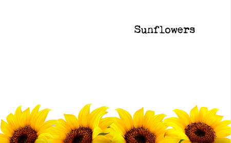 Illustration for Nature Background With Yellow Sunflowers. Vector - Royalty Free Image