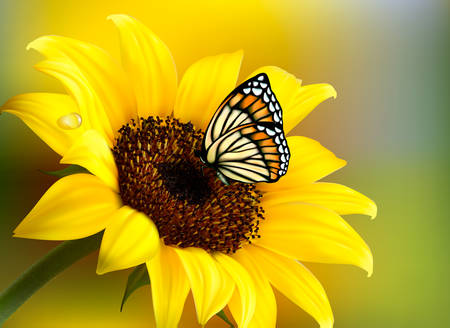 Illustration for Yellow sunflower with a butterfly. Vector. - Royalty Free Image