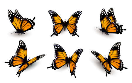 Illustration for Six butterflies set. - Royalty Free Image