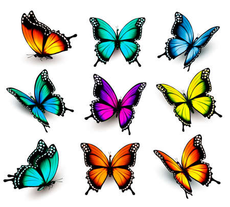 Illustration for Collection of colorful butterflies, flying in different directions. - Royalty Free Image