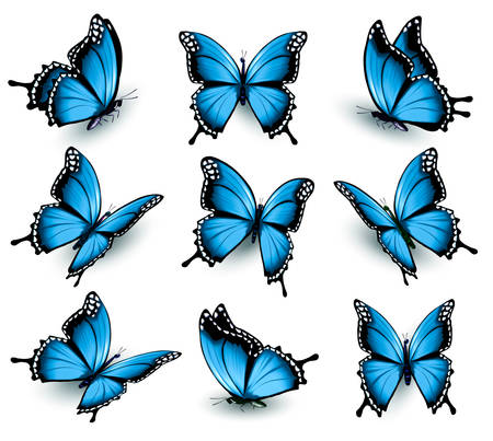 Illustration for Set of beautiful blue butterflies. - Royalty Free Image
