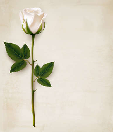 Ilustración de Happy Mother's Day background. Single white rose on an old paper background. - Imagen libre de derechos