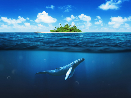 Photo pour Beautiful island with palm trees. Whale underwater - image libre de droit