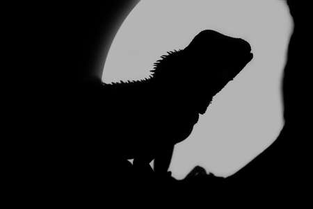 A closeup shot of a water dragons silhouette in the full moons light.