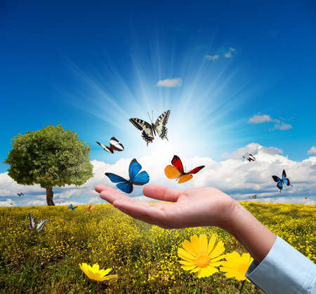 Photo pour Protect environment concept with flower and butterfly - image libre de droit