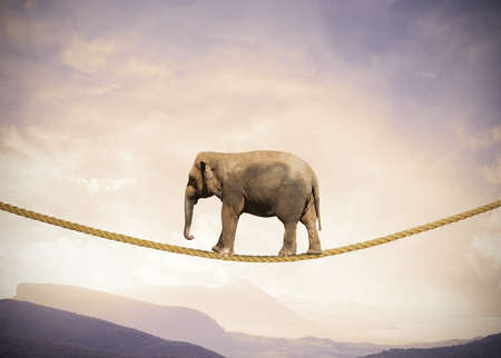 Foto de Concept of difficulty in business with elephant on a rope - Imagen libre de derechos