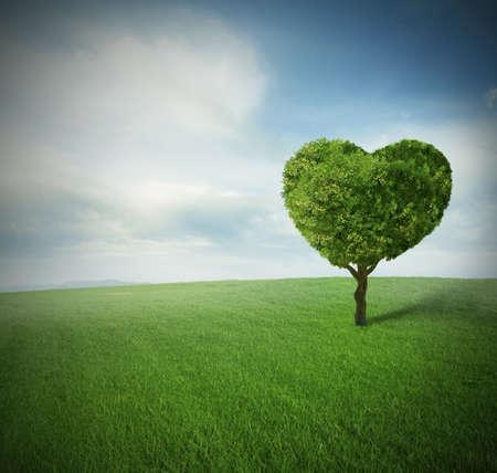 Foto de Heart tree in a paceful green field - Imagen libre de derechos