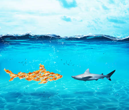 Photo pour Big shark made of goldfishes. Concept of unity is strenght,teamwork and partnership - image libre de droit