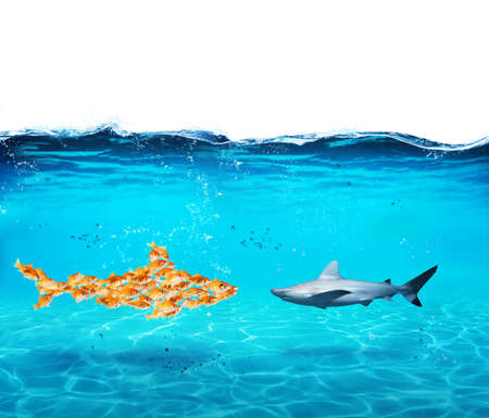 Foto per Big shark made of goldfishes. Concept of unity is strenght,teamwork and partnership - Immagine Royalty Free