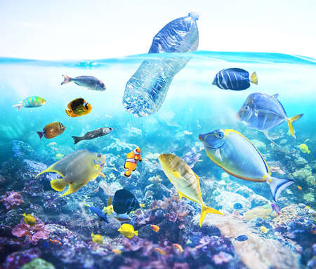 Photo for Fishes watch a floating bottle. Problem of plastic pollution under the sea concept. - Royalty Free Image