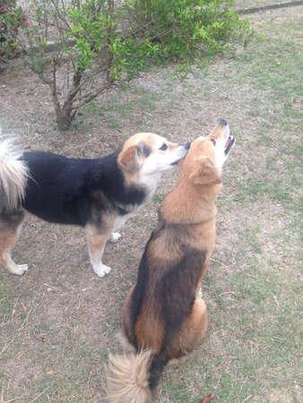 Foto de Two dogs are playing - Imagen libre de derechos