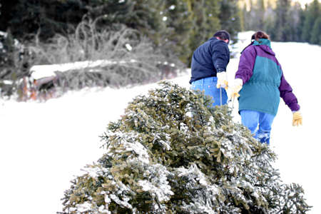 christmas tree - husband and wife having cut down their own tree are pulling it out of the forest. blown highlights in snow, focus on tree.