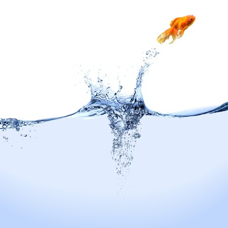 A goldfish jumping out of the water.