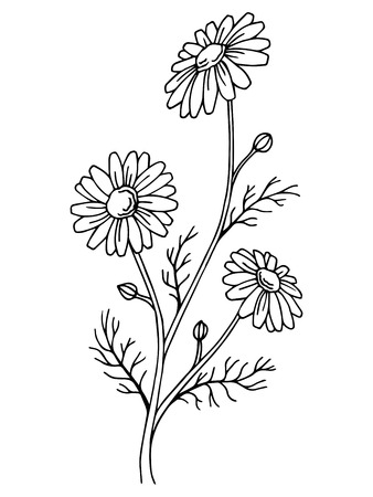 Illustration pour Chamomile flower graphic art black white isolated illustration vector - image libre de droit