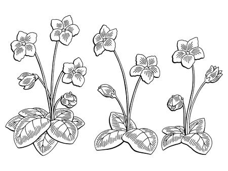 Ilustración de Violet flower graphic black and white isolated sketch illustration vector - Imagen libre de derechos