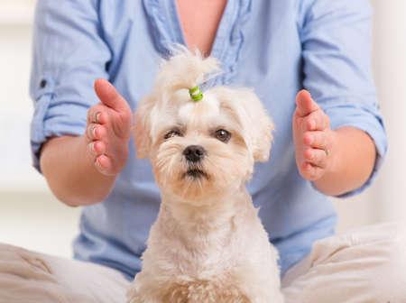 Foto de Woman doing Reiki therapy for a dog, a kind of energy medicine  - Imagen libre de derechos